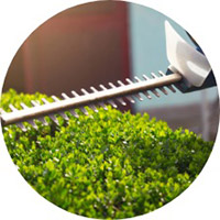 hedge-trimming-service