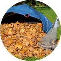 leaf-clearance-service