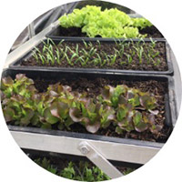organic-vegetable-plot-creation